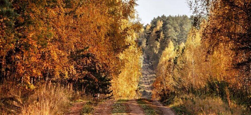 леса самары